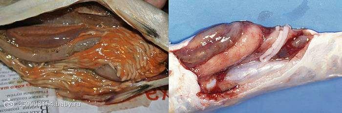 паразиты живущие крови человека