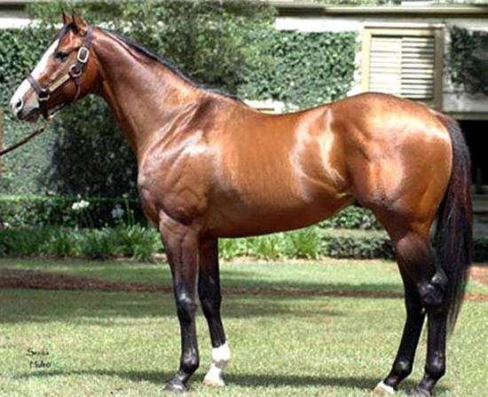 Жеребец чистокровной верховой Грин Манки, фото породы лошадей фотография