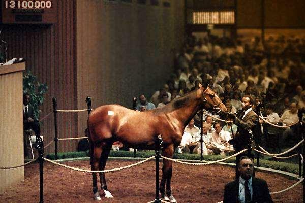Чистокровный английский скакун Сиэтл Дансер, фото породы лошадей картинка