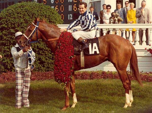 Чистокровный английский жеребец Секретариат, фото породы лошадей фотография картинка