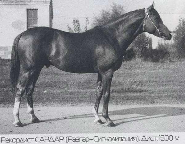 Чистокровный верховой жеребец Сардар, фото породы лошадей фотография