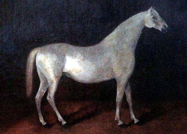 Арабская лошадь Сметанка, фото породы лошадей картинка