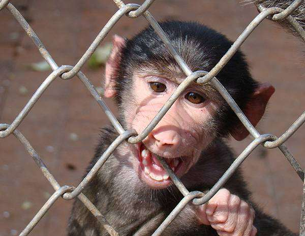 Детеныш примата, фото фотографии обезьяны