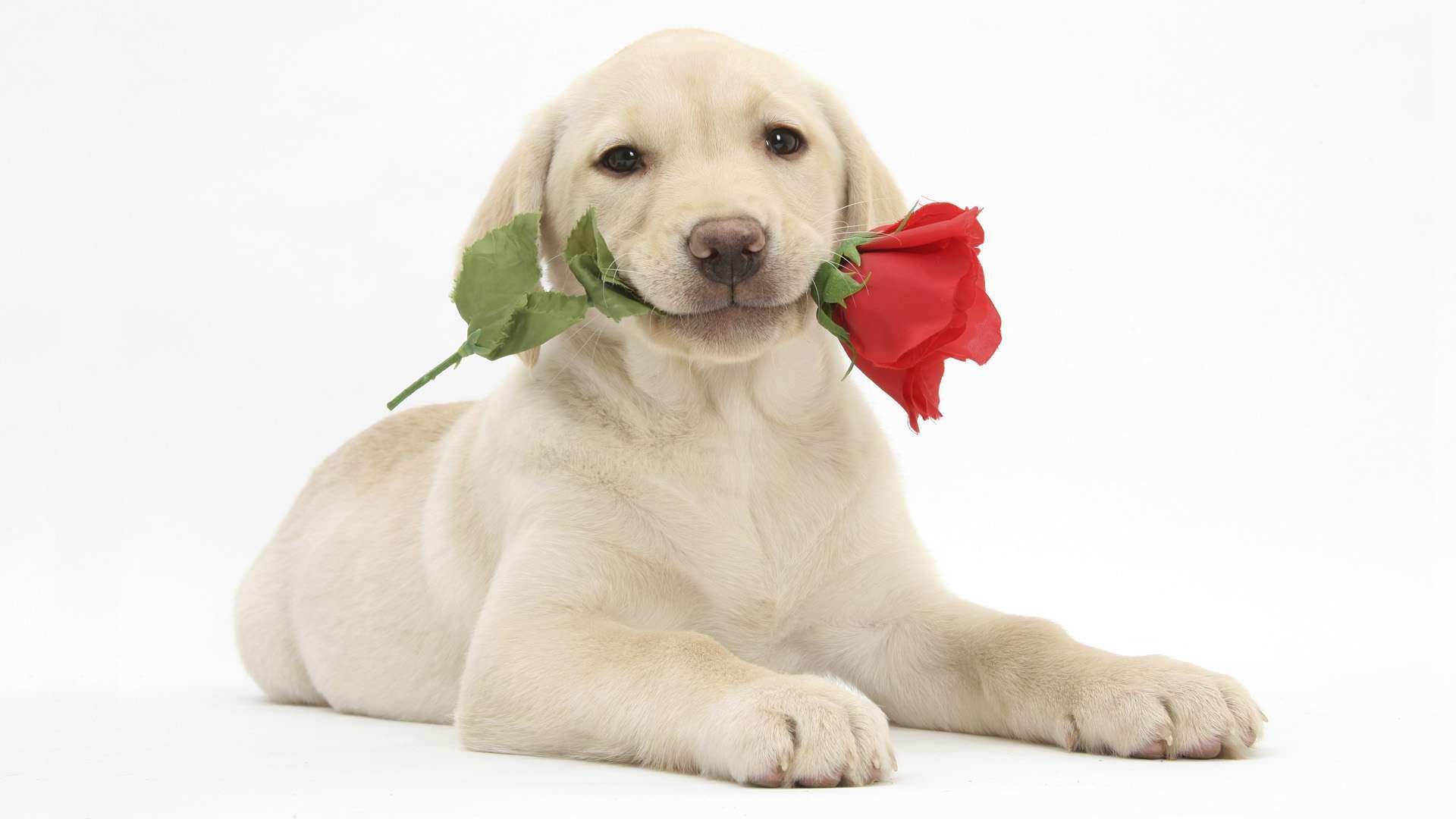 Девочка пёс собака загрузить