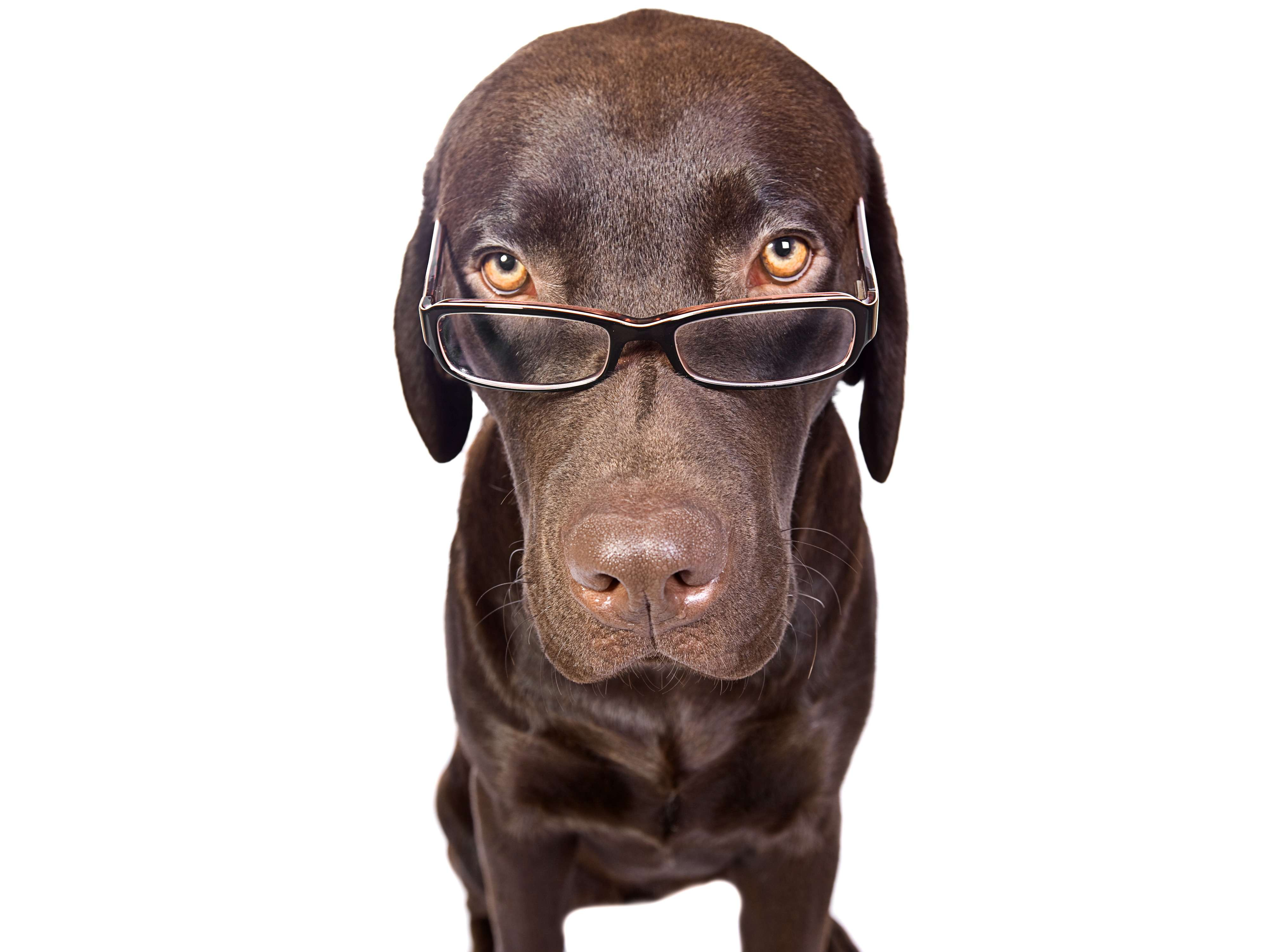 dog with glasses - HD4000×3000