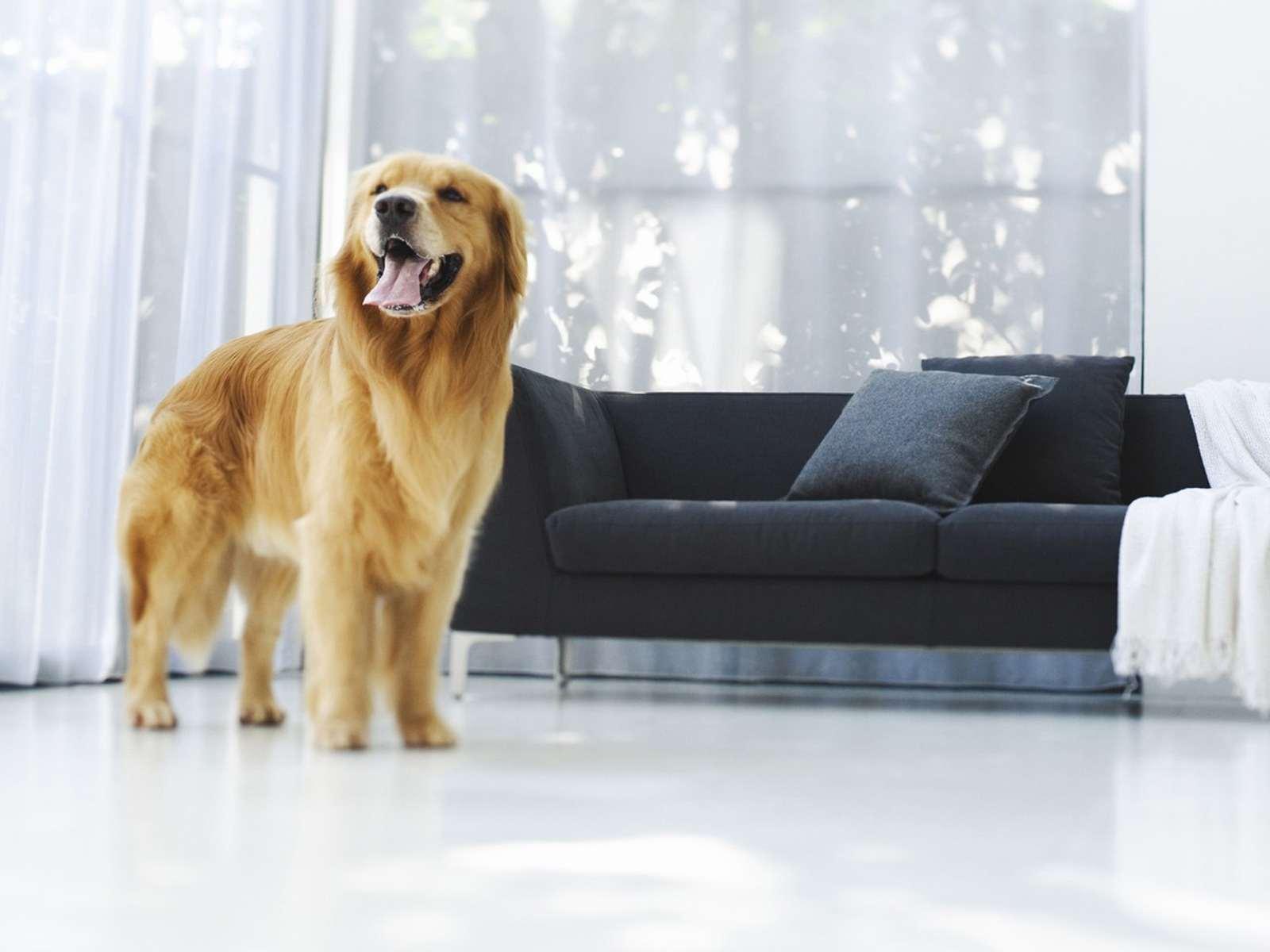 Собака в доме фото