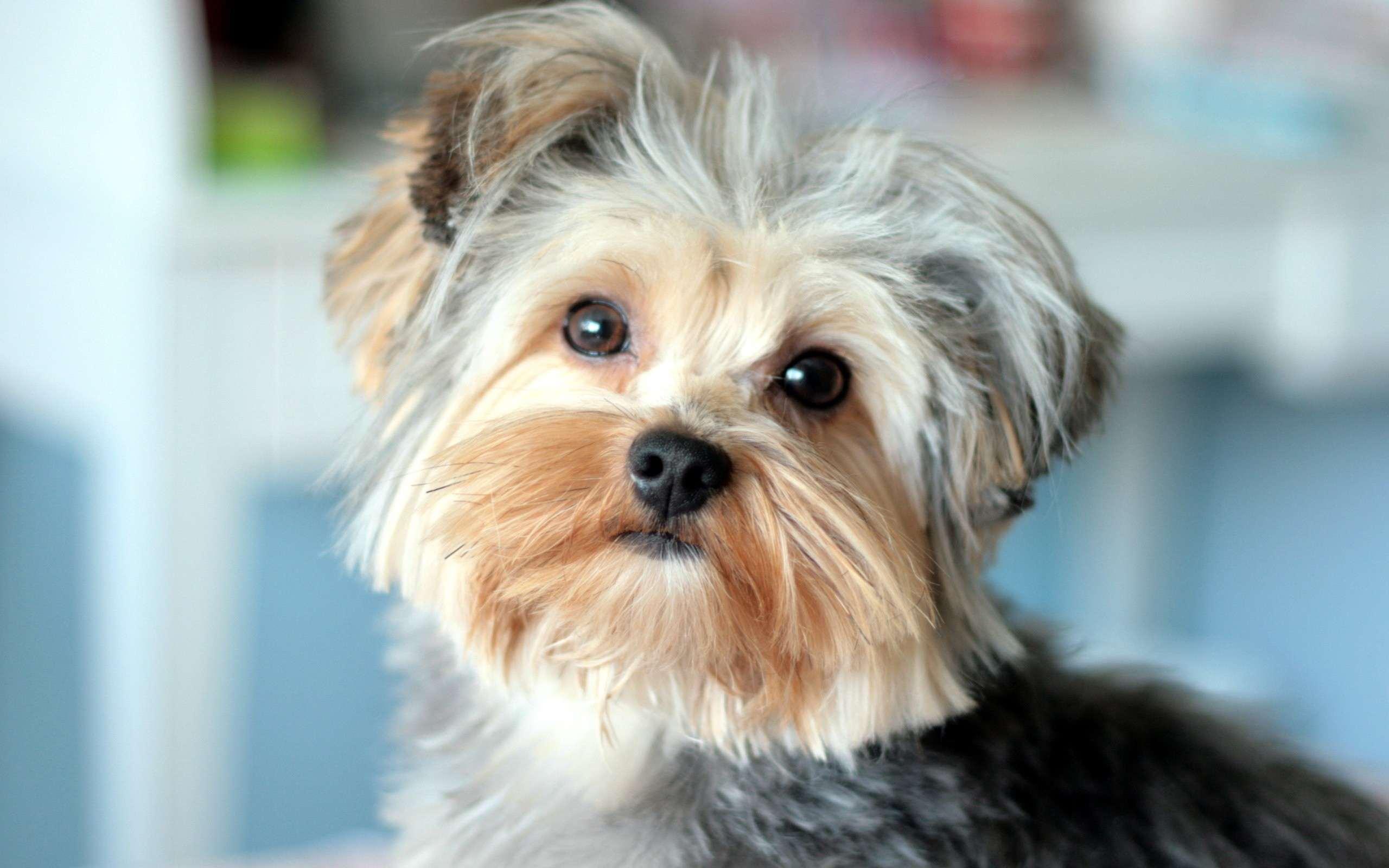 Прививки для собаки какие и когда - 6300