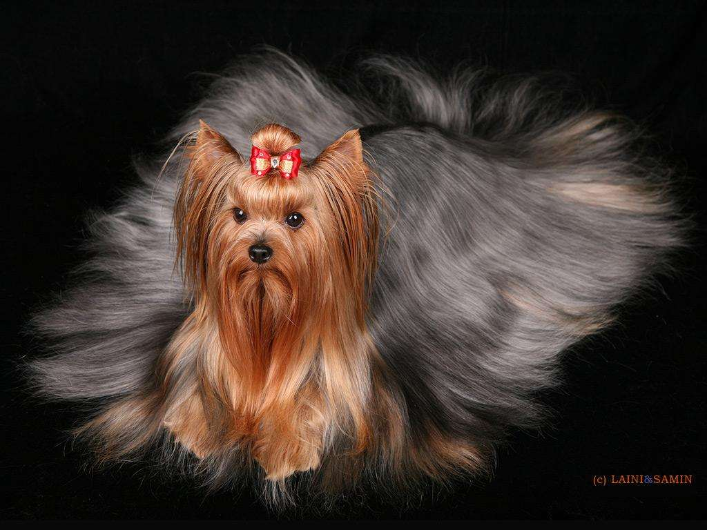 Породы собак фото с названиями выбираем друга по душе