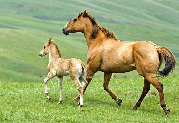 Кобыла с жеребенком, фото лошади кони фотография картинка