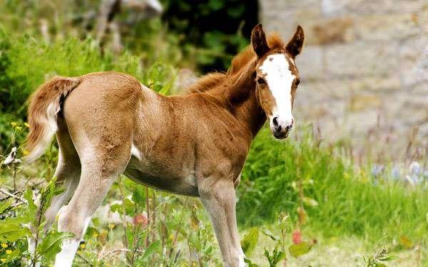 Жеребенок, фото лошади кони фотография картинка