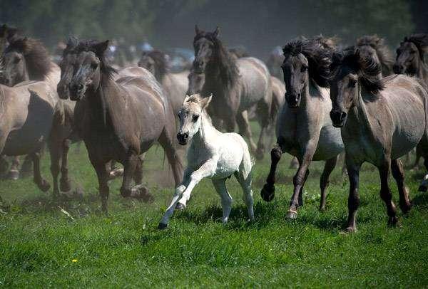 Табун кобыл и один жеребенок, фото лошади кони фотография картинка