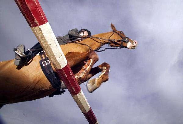 Конкур, фото конный спорт лошади кони фотография картинка