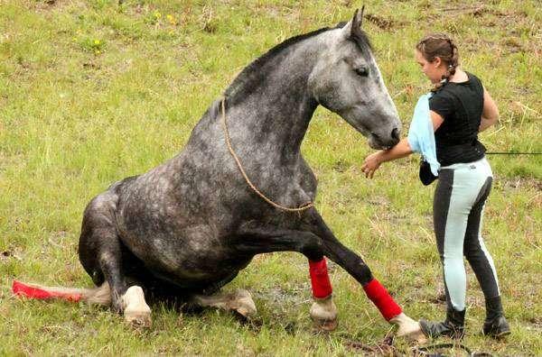 Выездка лошади, фото конный спорт фотография картинка