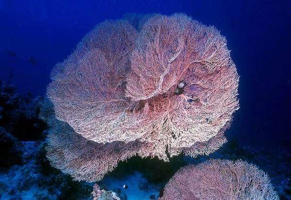 Морские кораллы, фото беспозвоночные новости фотография картинка