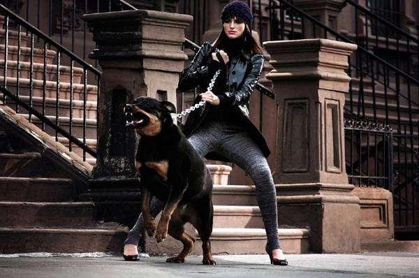 Агрессивный злой ротвейлер, фото новости о собаках фотография картинка