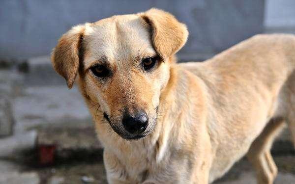 Дворняжка, фото новости о собаках фотография картинка