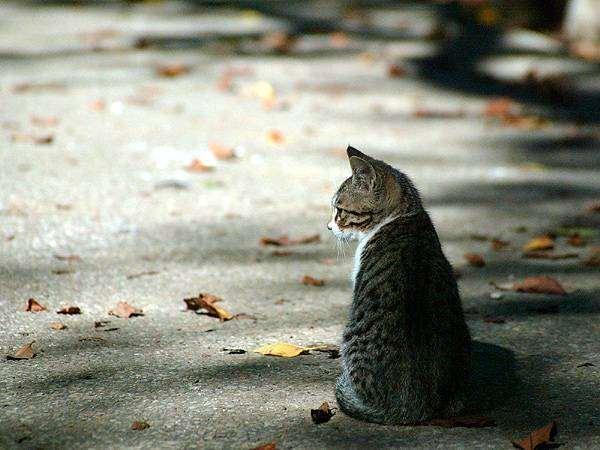 Котенок на дороге, фото новости о животных фотография кошки