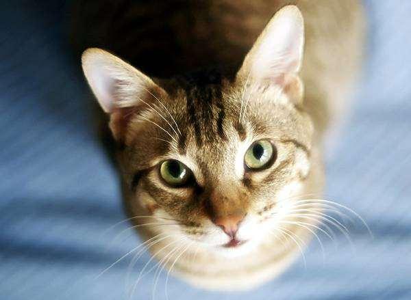 Любопытная кошка, фото поведение кошки фотография