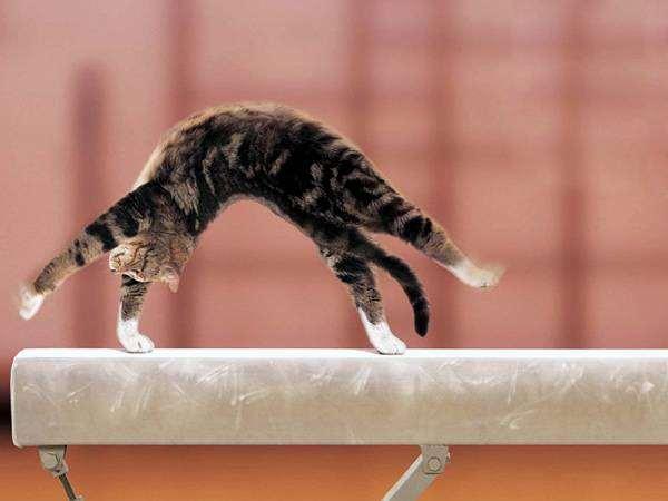 Кошка - гимнастка, фото поведение кошки фотография