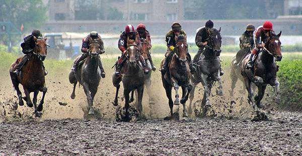 Скачки лошадей, фото воспитание лошадей фотография