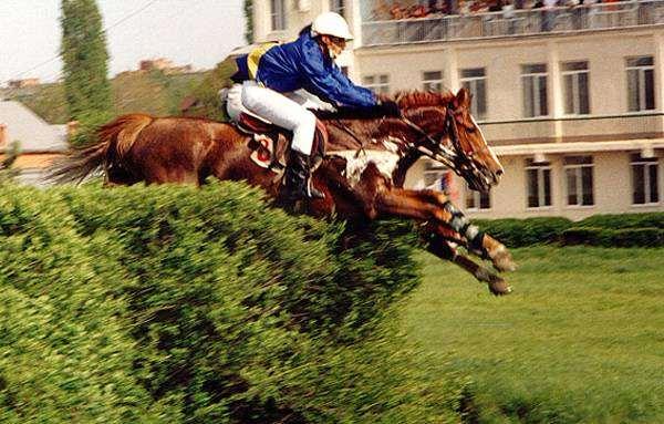 Барьерные скачки, фото выращивание лошадей фотография