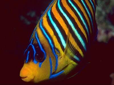 Колумнариоз рыб и как от него избавиться, фото фотография