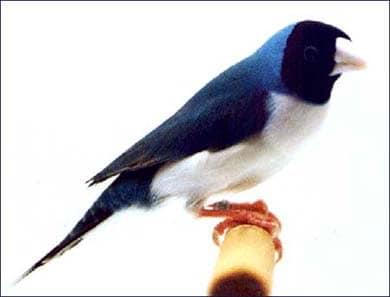 Рисовка, фото фотография, птицы