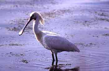 Птицы ростовской области картинки