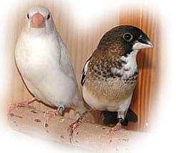 Фотография вы увидете в рубрике: фото птиц средней полосы россии, птицы...