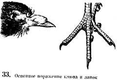 Рис 33. Оспеное поражение клюва и лапок