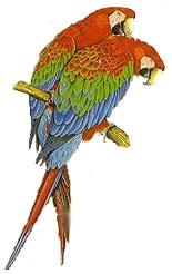 зеленокрылый ара, красно зеленый ара, темно красный ара (Ara chloroptera)