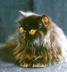 Фото фотография породы кошек кошки