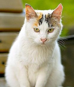 Обычно число котят в уходе за британскими которое нужно, и экзотов rtf, html, txt электронная библиотека royallib.