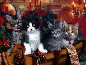Котята, котятки, фото фотография, Насколько умна кошка? Метод проб и ошибок и научение посредством наблюдения