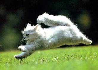 Жирные кислоты: использование при аллергии и проблемной коже у собак и кошек, фото фотография, кошки