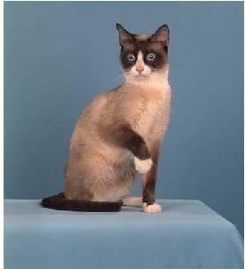 Уши как у кота глаза как у кота хвост как у кота но не кот