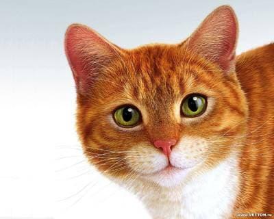 Болезнь кота с желудок