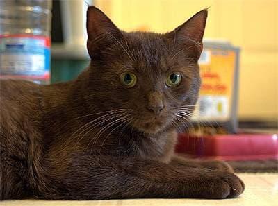 Рыжий кот с коричневыми глазами