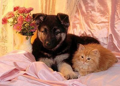Антиоксиданты в качестве консервантов для кошачьих и собачьих кормов, фото фотография
