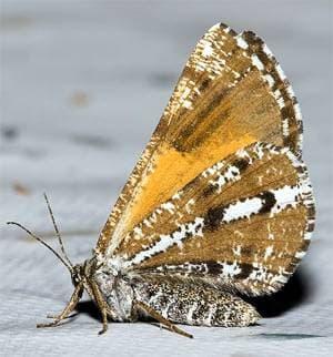 Фото фотография бабочки насекомые