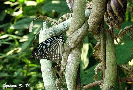 Бабочка на ветке, фото фотографии, насекомые