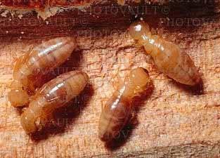 Термиты, фото фотография, насекомые