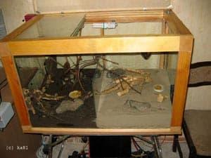 Террариум для скорпиона, фото фотография, паукообразные