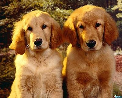 Как оказать первую помощь собаке при кровотечениях? фото фотография