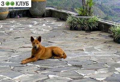 Антигельминтики (противоглистные препараты) для собак, фото фотография