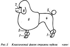 Классический фасон стрижки пуделя - ЛЕВ