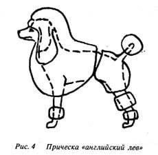 стрижка для пуделя - АНГЛИЙСКИЙ ЛЕВ