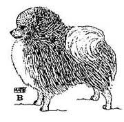 собака В