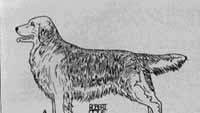 собака А