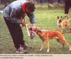 Инструктор гладит щенка по голове, чтобы приучить его к воздействию своих рук
